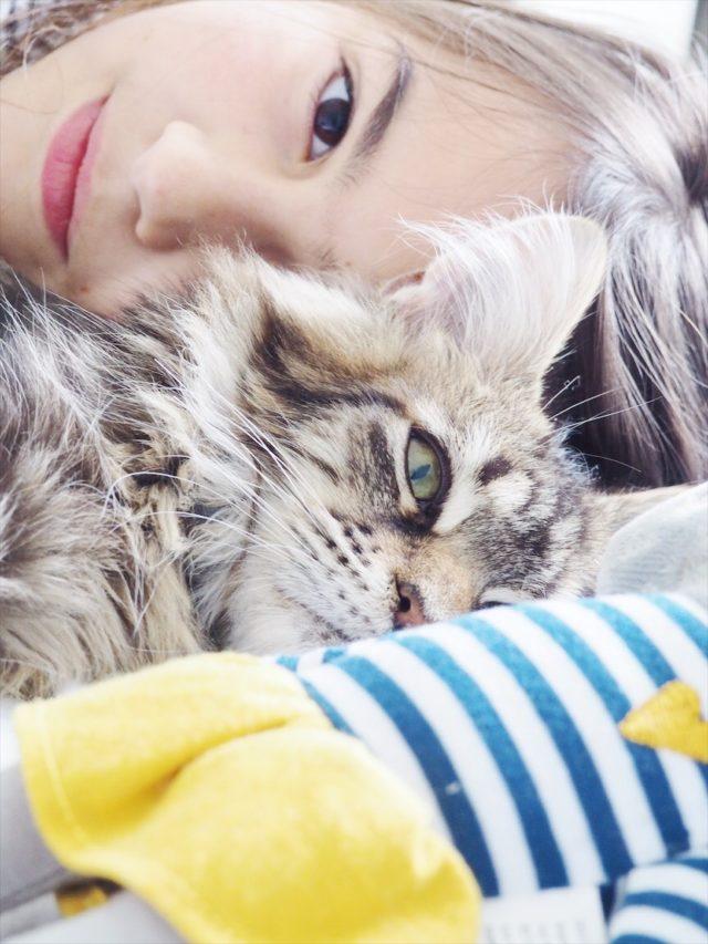amour de chat